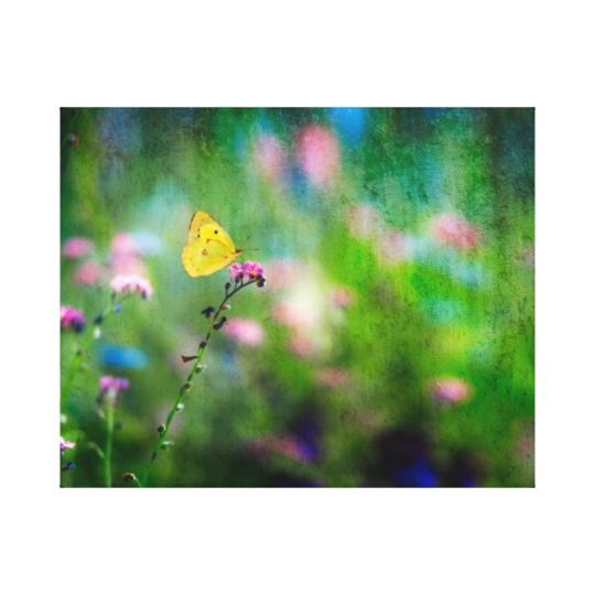 Yellow Butterfly in Summer Meadow canvas print