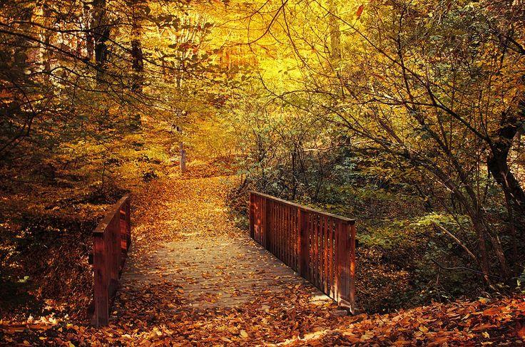 Bridge to Autumn by Zsolt Zsigmond