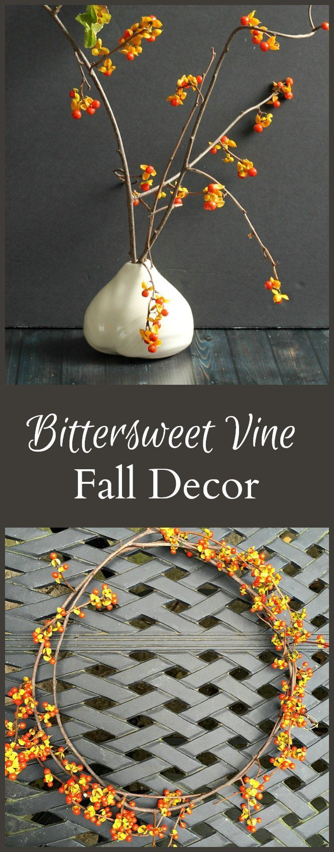 Wish i could find or buy bittersweet branches in our area don t - Beautiful Bittersweet Vine Decorating With Nature