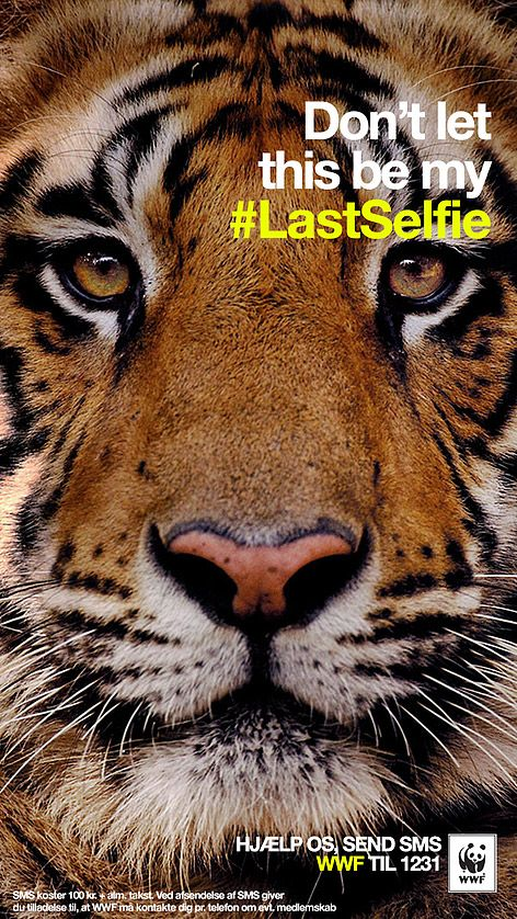 Mettre en avant les espèces en danger en parlant à un public toujours plus connecté. La campagne « Don't let this be my lastselfie » diffusée au Danemark et en Turquie se compose de selfies des 5 espèces menacées soutenues par WWF - 2014