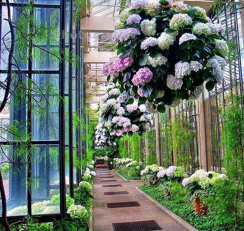 unreal hanging plants, love the idea of using hydrangeas in hanging baskets.