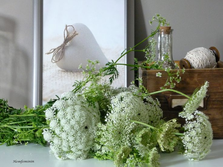 DIY Inspiration flowers flavvo blommor:wildmorötter- meine Liebelinge von der Wiese: wilde Möhre- my favorit flowers  from the meadow