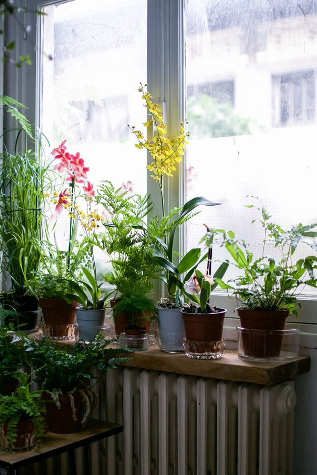 A beautiful plant collection.