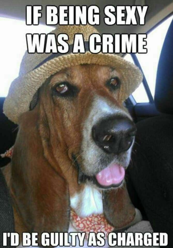 Yes!  The Bassett Hound!