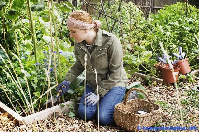 Organic gardening can be passed very, very good as well as a hobby for beginners. This factor would be true if you are the type of people who have a passion for gardening. It may not be everyone's cup of tea throughout. Has become the notion of self You're lucky if you include also people