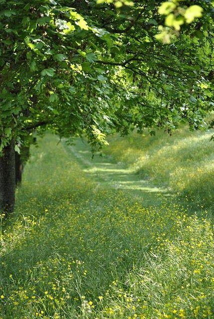 mowed path