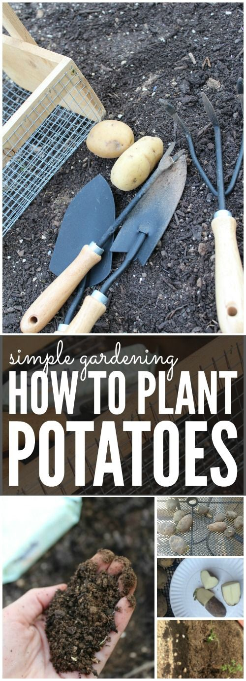 How to Plant Potatoes | Simple Gardening Tips for Spring and Summer! Garden Hacks for Beginners! #CleanRippleStyle [ad]