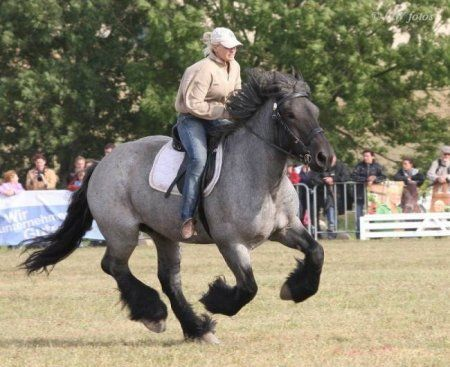 Голландская упряжная (ломовая) лошадь