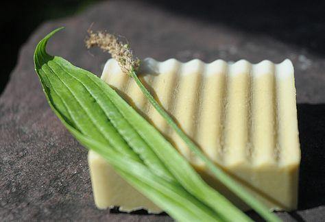 Bio und vegan: Reine Olivenölseife mit Spitzwegerich. Eine gute Wahl auch für Kinder und Menschen mit #Allergien. Diese milde kaltgerührte #Naturseife hinterlässt durch die enthaltene Rügener #Heilkreide eine besonders glattes Hautgefühl.  Ab sofort erhältlich im Online-Shop ab 4,-- Franken. Versand schweizweit 100 Prozent #plastikfrei.  #zerowaste #nowaste #veggie #Naturkosmetik #Seife #beauty #Olivenseife #vegan #bio