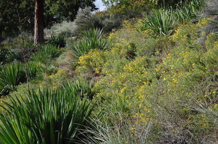 Xeriscape garden, Summerland Ornamental Gardens.