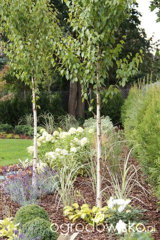 Zimozielony ogród przy białym domu - strona 142 - Forum ogrodnicze - Ogrodowisko
