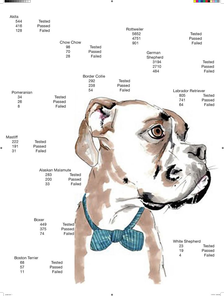 American Temperament Test Society #dog #typography #graphic #design #dog #boxer #temperament #awareness #puppy