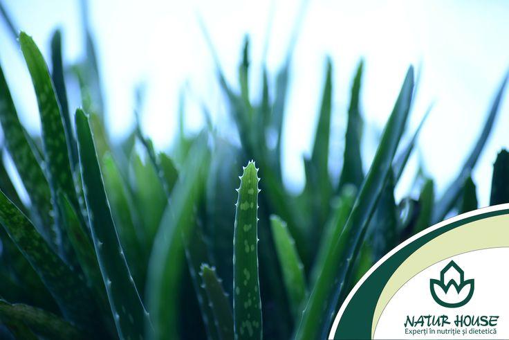 Pe langa alte beneficii pentru sanatate, aloe vera este si un bun laxativ. Aceasta planta are proprietati antibacteriene, antiparazitare si antivirale. De asemenea, are actiune detoxifianta si regleaza metabolismul.  Mai multe sfaturi de #nutritie si #sanatate pe www.natur-house.ro