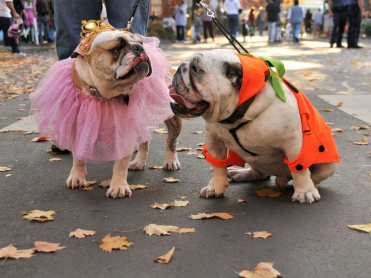 quiz which halloween dog is your soulmate - Dog Halloween Ideas