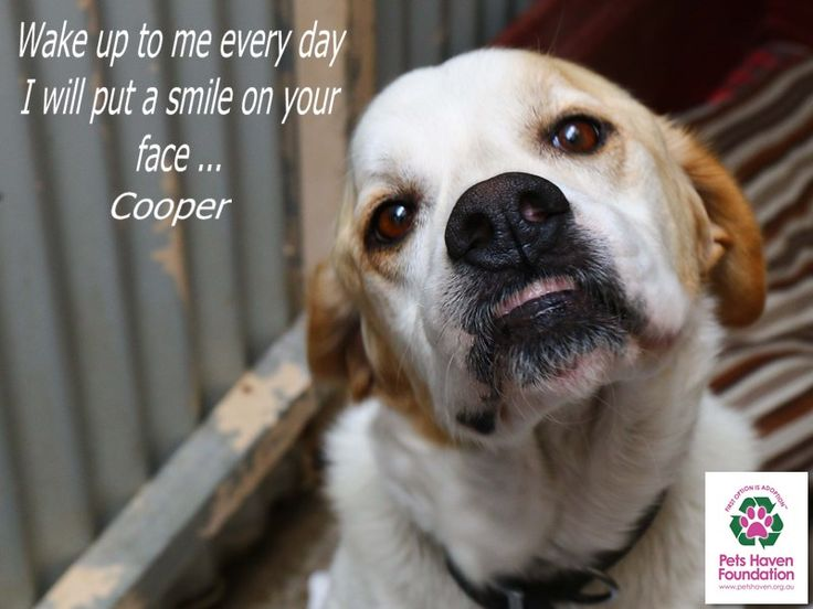 Cooper has found a home YAY
