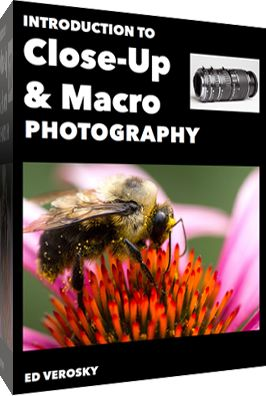 Editor's Note: This is parta series on macro photography this week. Look for a new one each day. The next newsletter will have them all if you miss any! Macro photography is all about getting close and photographing small things. The tiny world of bugs and insects is perfect for macro photographers as there are …
