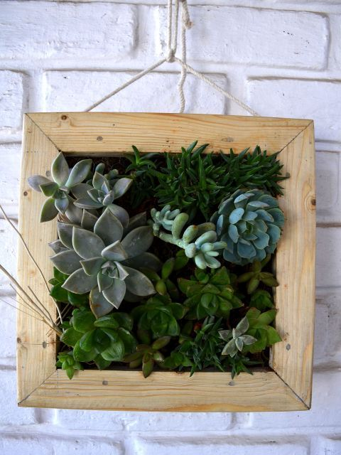 Return Gifts | Shop Online for Plants Bangalore India