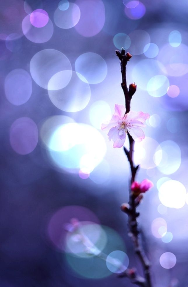 Bokeh / soft and subtle images