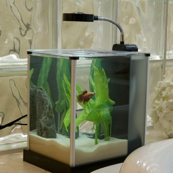 17 meilleures id es propos de petit aquarium sur pinterest nano aquarium aquarium design et. Black Bedroom Furniture Sets. Home Design Ideas