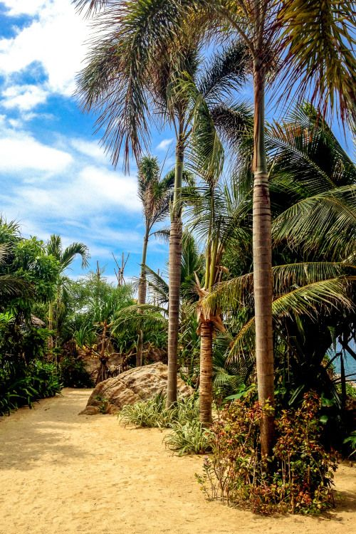 Sandy Jungle of Koh Phangan, Thailand