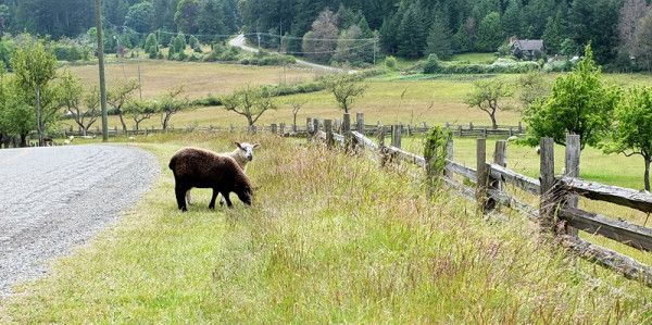 Roadside by the Ruckle Farm - The grass always looks greener on the other side.