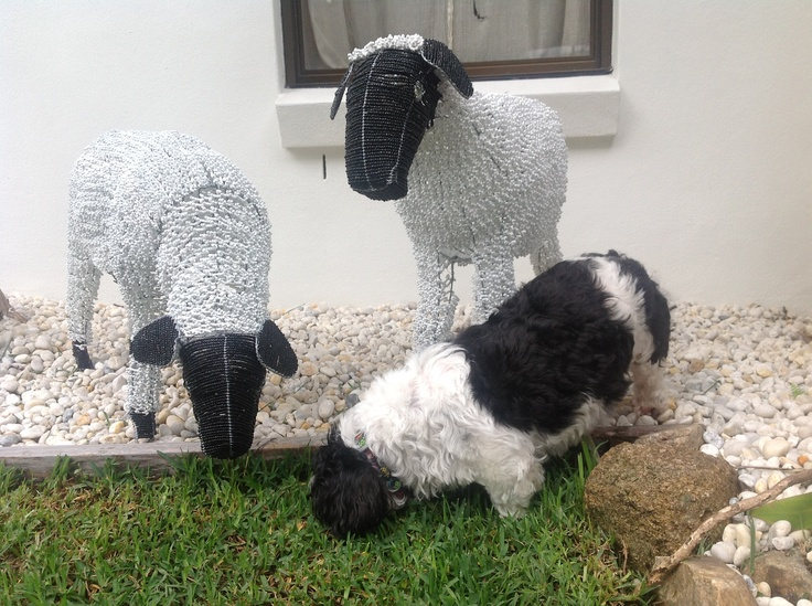 Shhitzhu with wire and bead sheep from Cape Town South Africa