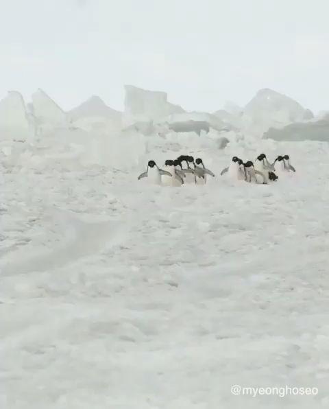 The Penguin Highway 🐧 in Antartica 😍