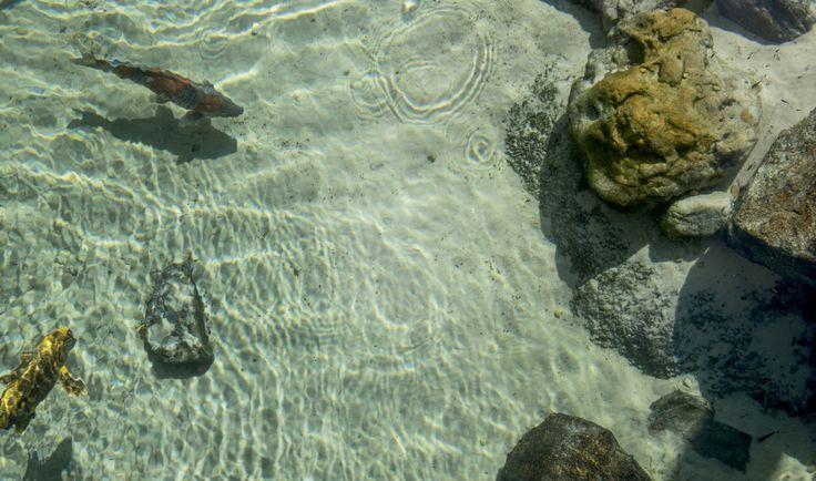 Entre na onda de piscinas naturais   – Me inspirando para fazer uma piscina