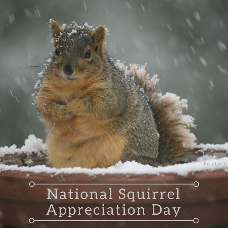 Every day should be National Squirrel  Appreciation Day!