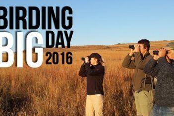Birding Big Day 2016 - http://ilovehermanus.co.za/event/birding-big-day-2016/
