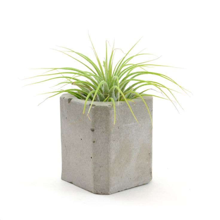 Concrete Mini Planter
