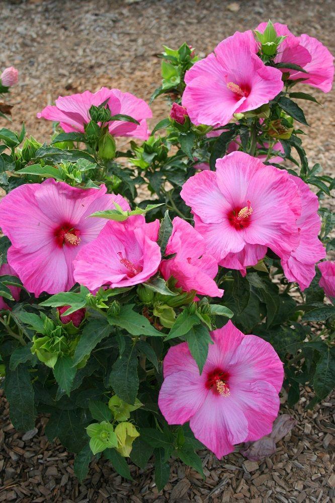 Pin de iraci Michel em FloresPlantas (com imagens)   Jardinagem