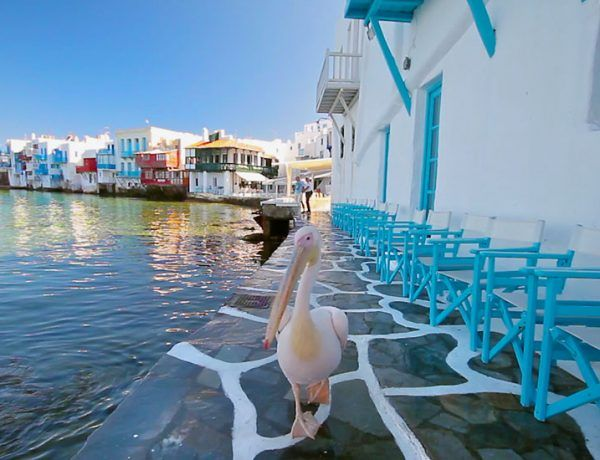 Mykonos: World's most popular and glamorous island of the Cyclades!