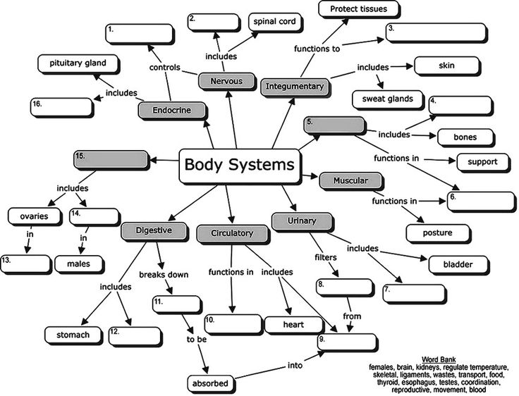 Body Systems Concept Map For Students To Fill In The Blanks