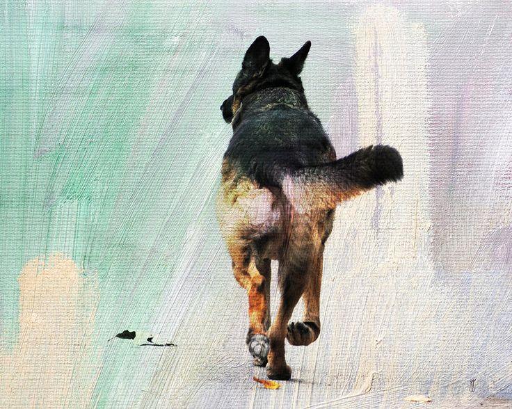 german shepherd art | ... - German Shepherd Taking A Walk Fine Art Prints and Posters for Sale