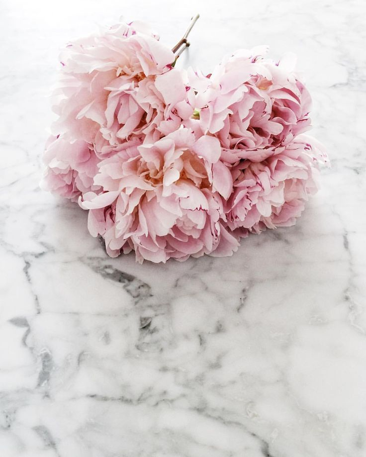 Pink peonies. See this Instagram photo by @____natasha_ • 65 likes