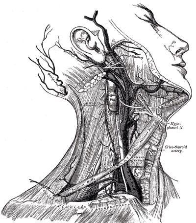 Grey anatomy of the human body