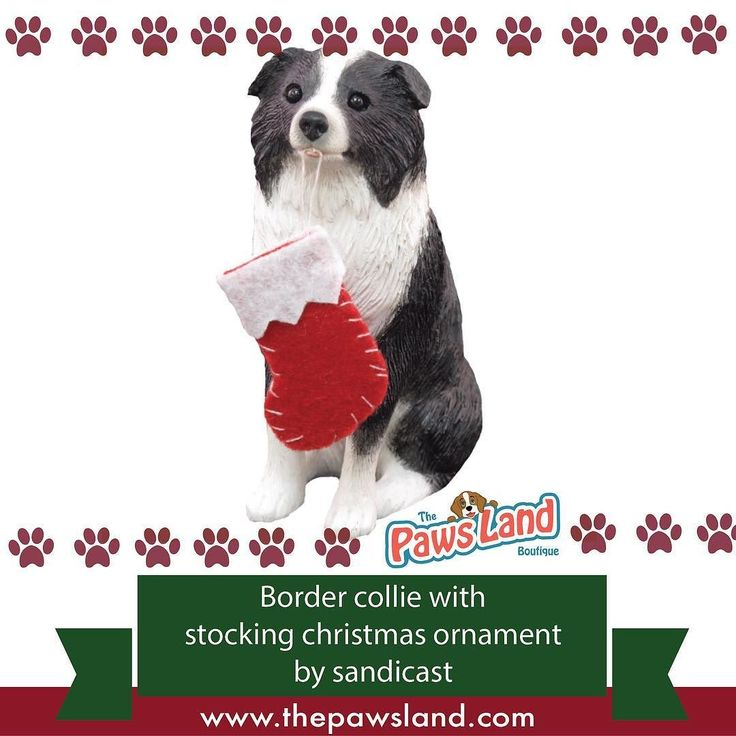 "#checkitout #christmas #products  Why We Love It:  The Border Collie Christmas Tree Ornament is a great way to decorate your home! Show off your love for your dog with this charming ornament. It features a realistic hand painted Border Collie! It's made of a cast stone mixture and is of the highest quality. The Border Collie Christmas Ornament is sure to capture all the beauty of your favorite pup!  Sizing Information:  Length: 3-4""  Width: 1-3""  Height: 2-4"" #dogs"