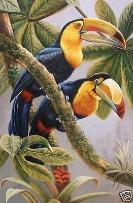 Toucan canvas