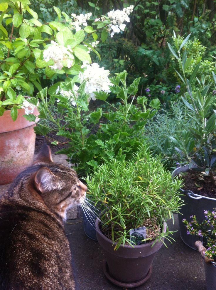 Plants in my garden after summer rain