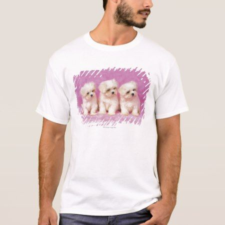 Maltese Dog; is a small breed of white dog T-Shirt - tap to personalize and get yours