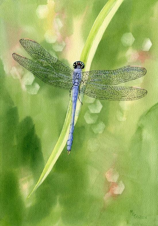 ^Beautiful Blue Dragonfly