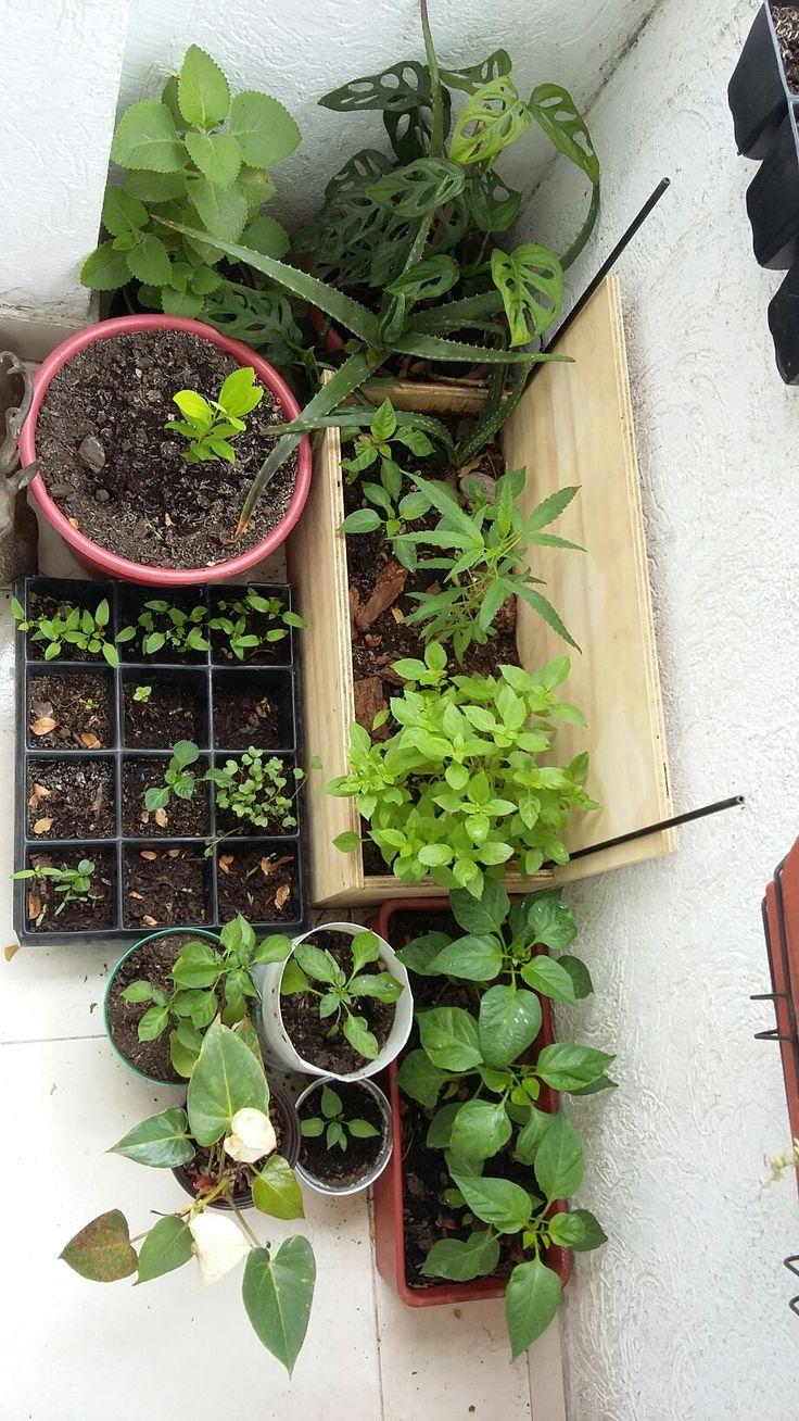 Jardines en crecimiento.
