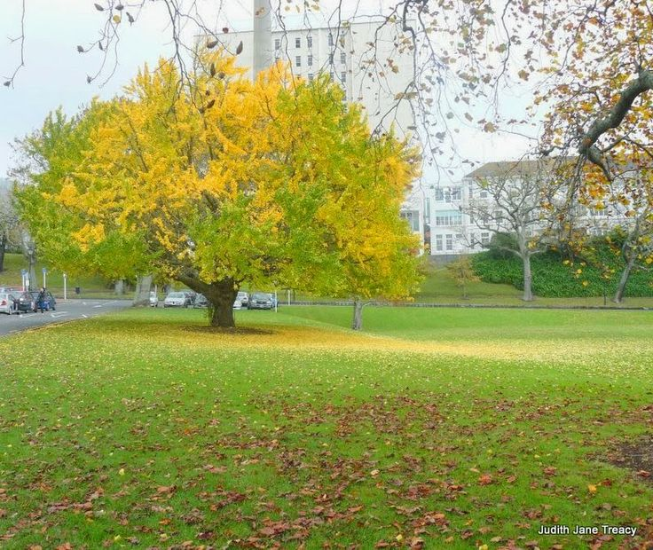 Heartsongs: Autumn in Auckland