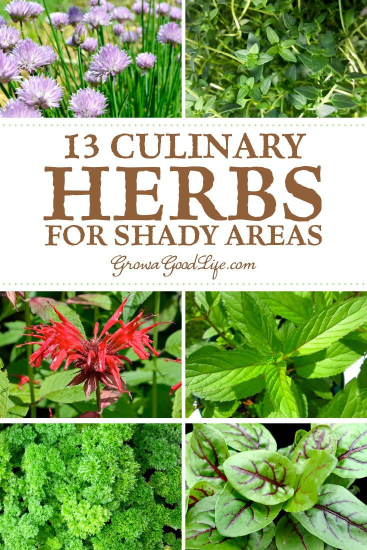 13 Culinary Herbs That Grow In Partial Shade Culinary Herbs