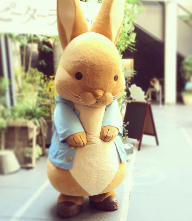#peterrabbit#shibuya#bunkamura#ピーターラビット展#渋谷#可愛い#癒し