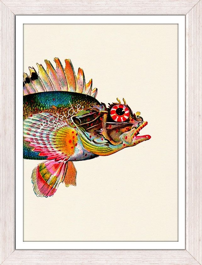Wall decor poster Sea Fish Monkfish - sea life print- Buying three or more  FREE SHIPPING WORLDWIDE. $12.00, via Etsy.