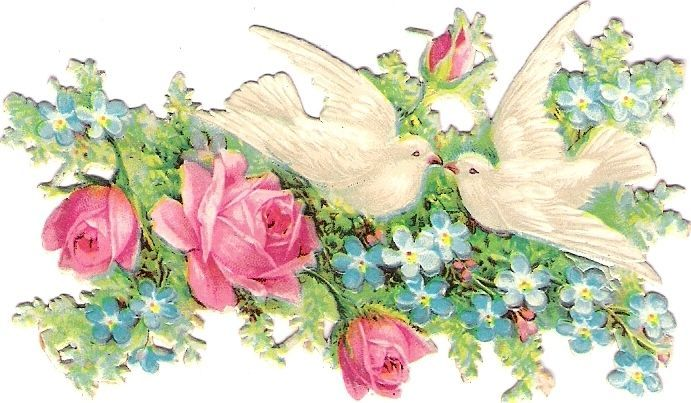Oblaten Glanzbild scrap die cut  chromo  Taube dove pigeon