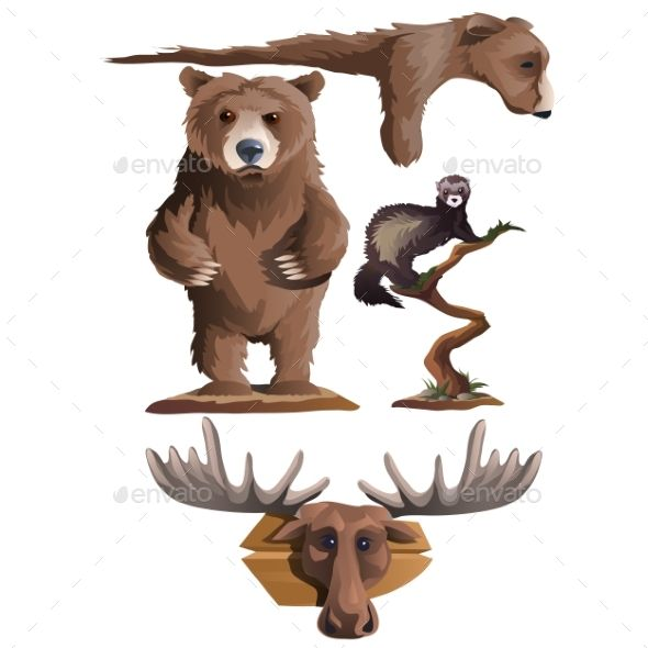 Hunting Trophies, Bear, Deer And Other Animals