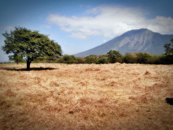 baluran national park, situbondo, east java, indonesia